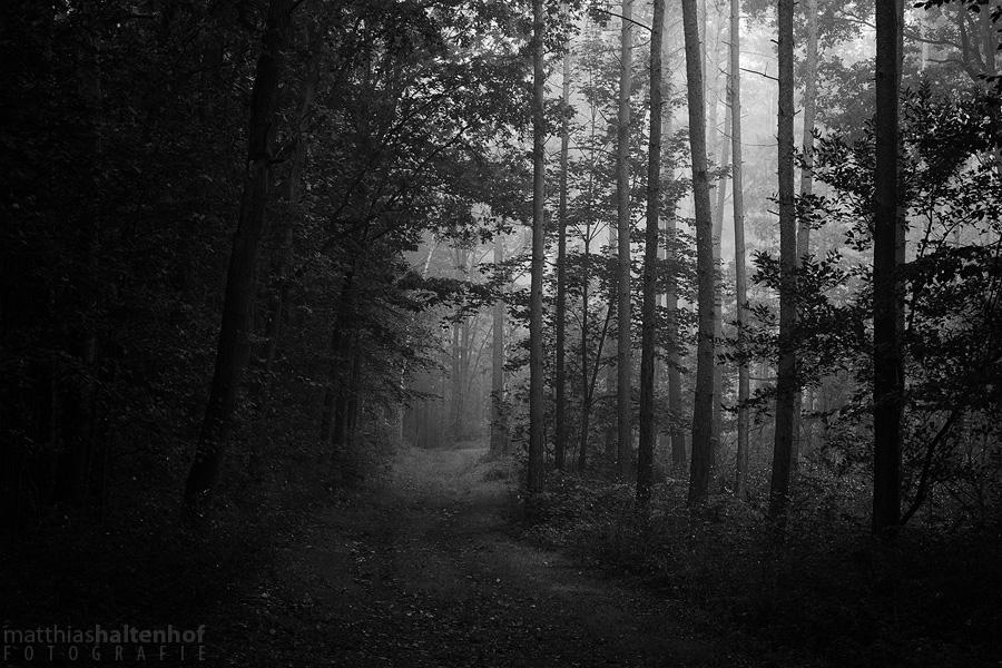 Dark Forest by MatthiasHaltenhof