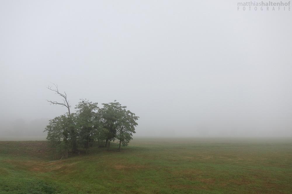 Fog in Gruna by MatthiasHaltenhof