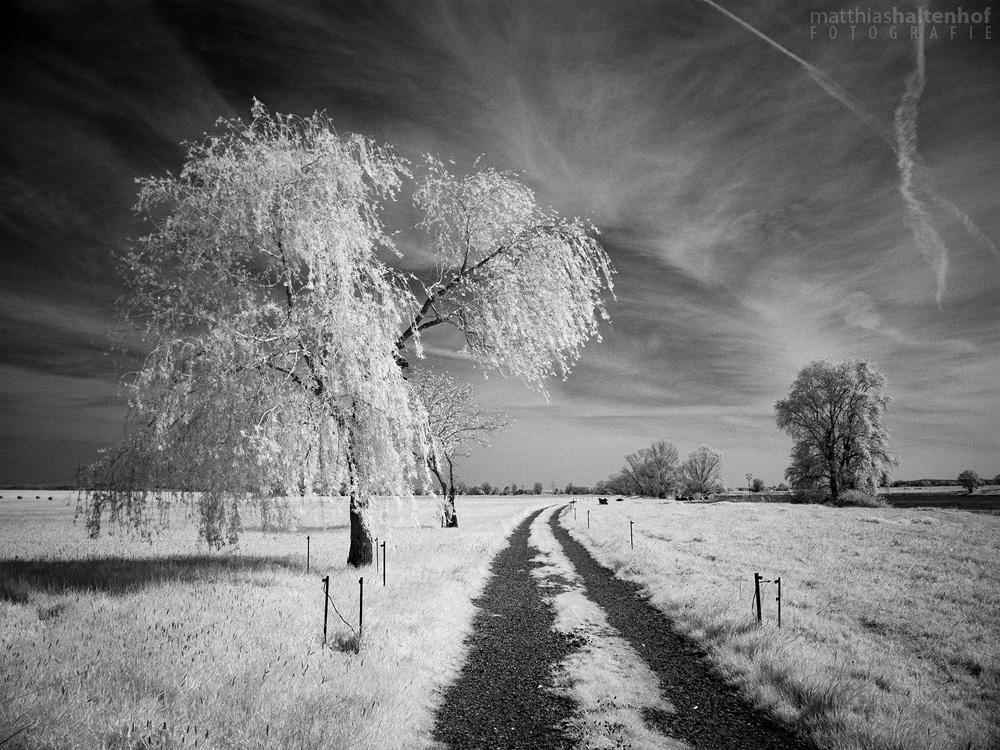 Skylarking by MatthiasHaltenhof