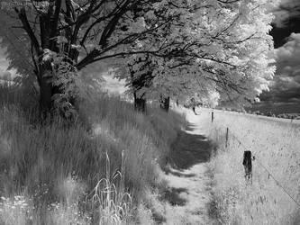 Walking in Whiteland 1 by MatthiasHaltenhof