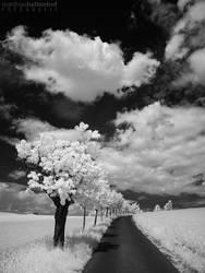 Walking in Whiteland 2 by MatthiasHaltenhof