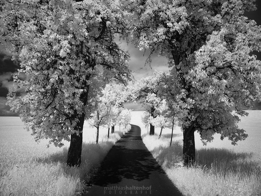 Walking in Whiteland 3 by MatthiasHaltenhof