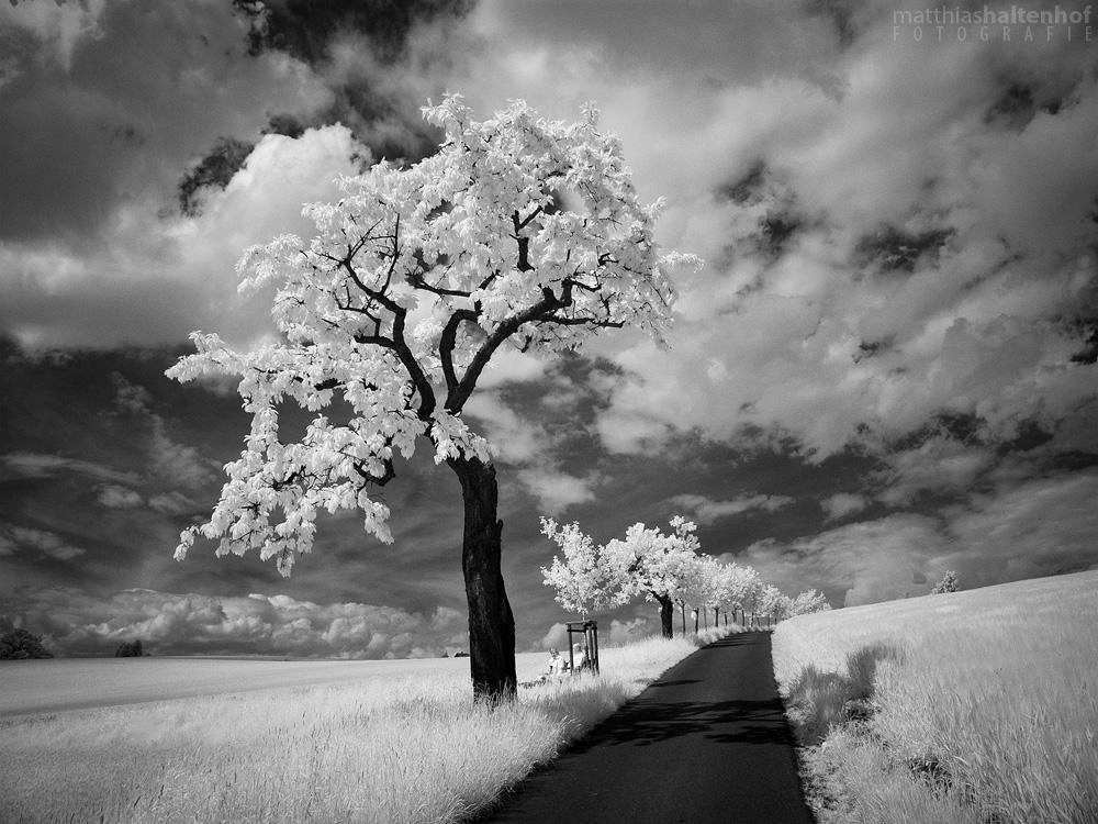 Walking in Whiteland 4 by MatthiasHaltenhof