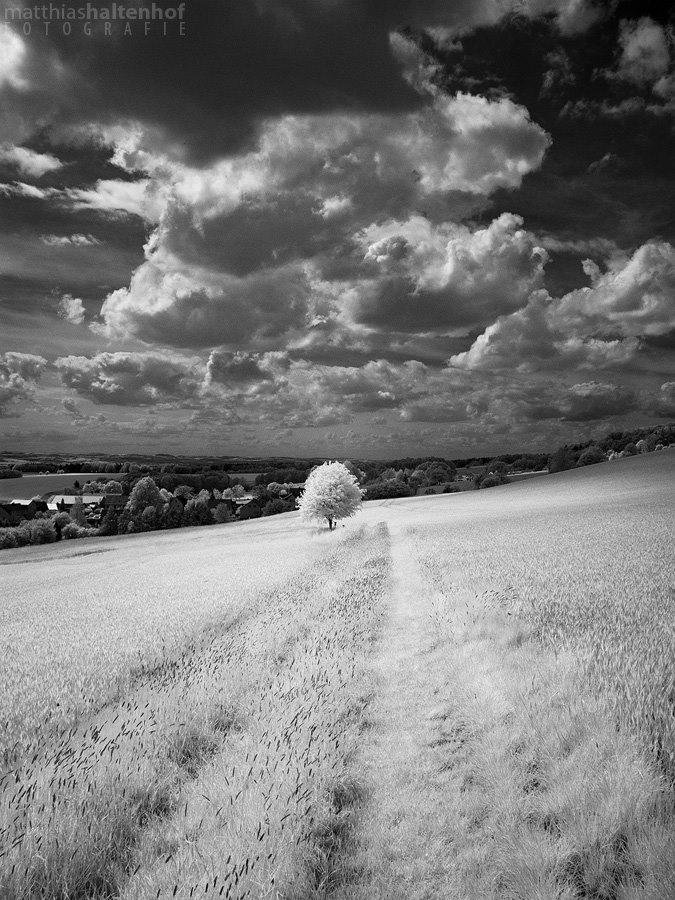 Walking in Whiteland 5 by MatthiasHaltenhof