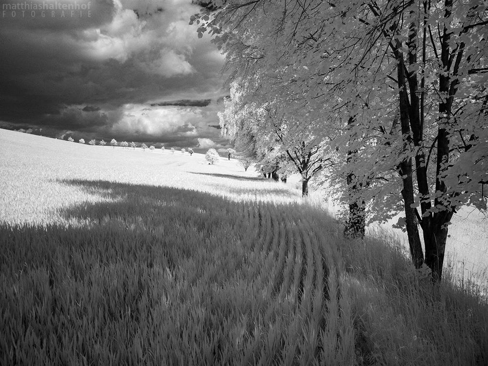 Walking in Whiteland 7 by MatthiasHaltenhof