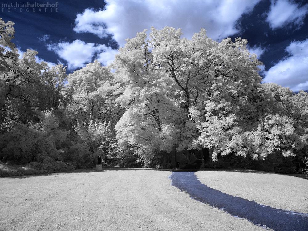 Blue Path by MatthiasHaltenhof