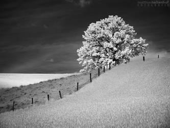 Walking in Whiteland 8 by MatthiasHaltenhof