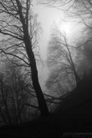 Misty Woods by MatthiasHaltenhof