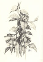 Flowers by Deino