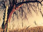 Field of Dreams by SonderWorks