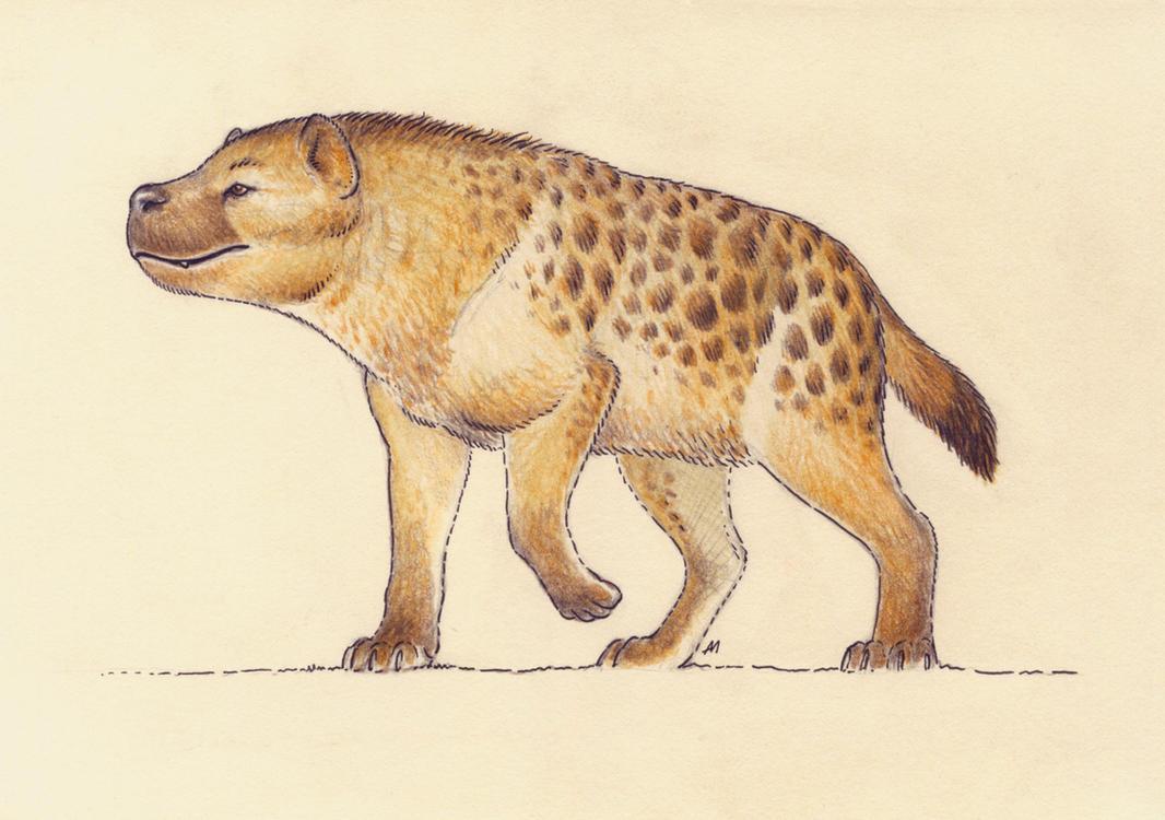 Dinocrocuta by Andrewsarchus89