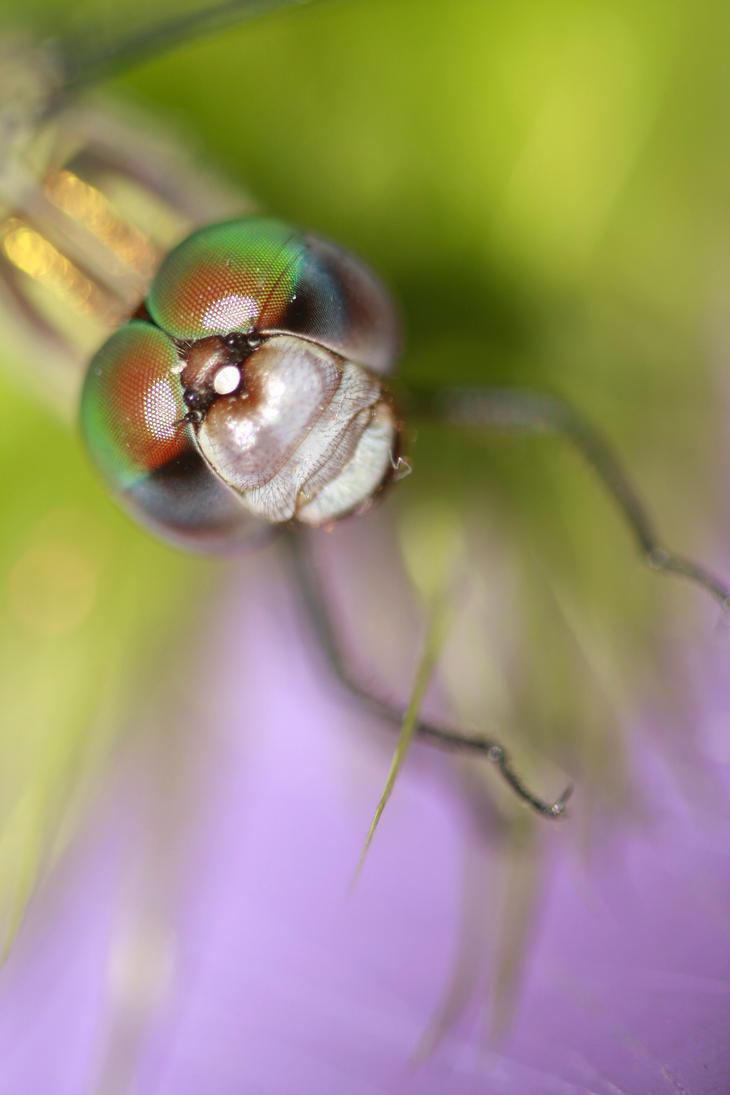 Dragonfly eyes by mjdaluz