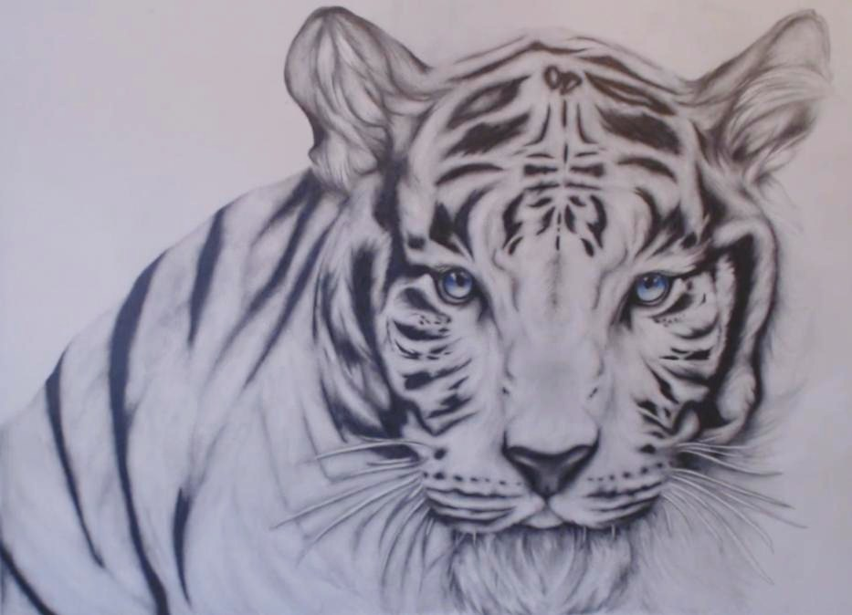 White Siberian Tiger Face Drawing