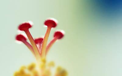 Flower by Krud3