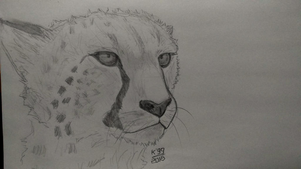 Cheetah  - This is my 11th cheetah! by kosko99