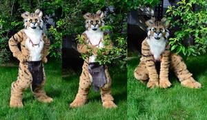 Haku the Lynx