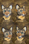 Tabby Cat Partial Head