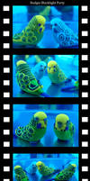 Budgie Blacklight Party