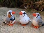 Zebra Finch Family (Comm)