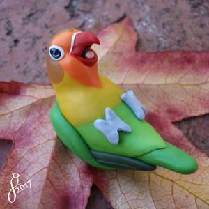 Playful Fischer's Lovebird