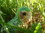 Kakapo Adventures: Into the Glowing Afternoon by The-Wandering-Bird