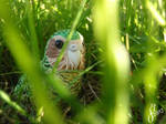 Kakapo Adventures: Stealth by The-Wandering-Bird