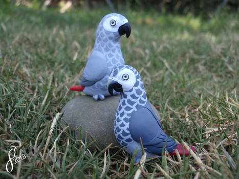 A Pair of African Greys