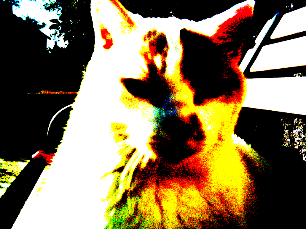 Cat Wont Stop Biting Me