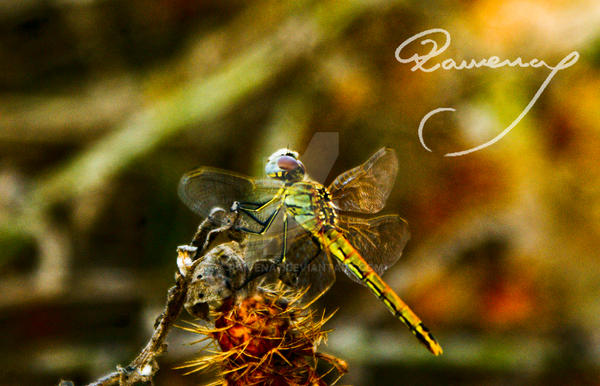 Insecto by Raivena7