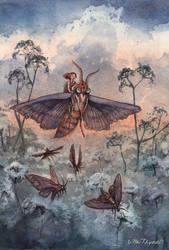 Noctuidae by UllaThynell
