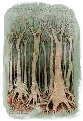 Tall Woods