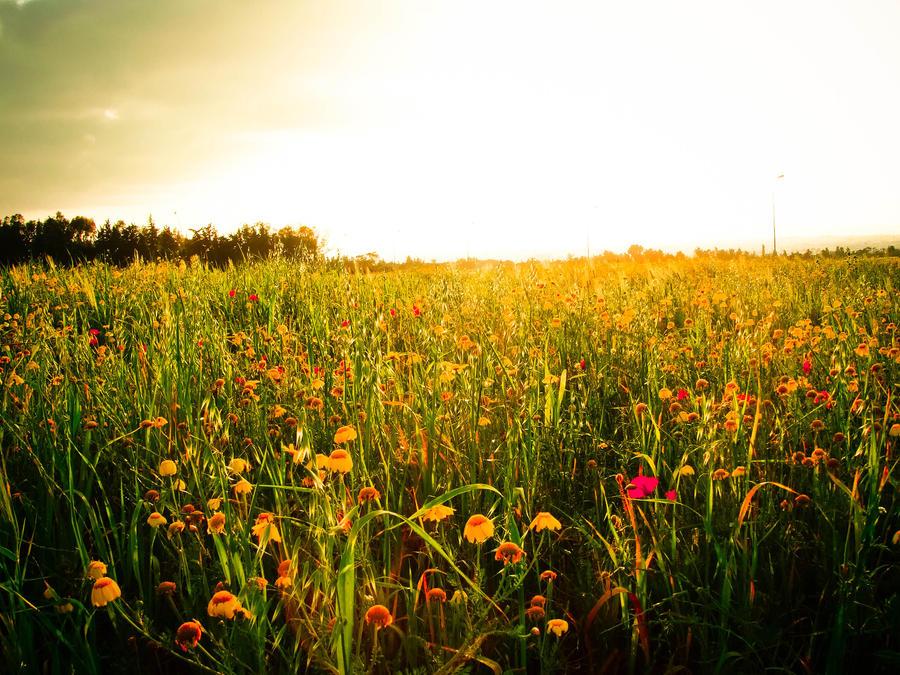 Spring1 by Archi-Med