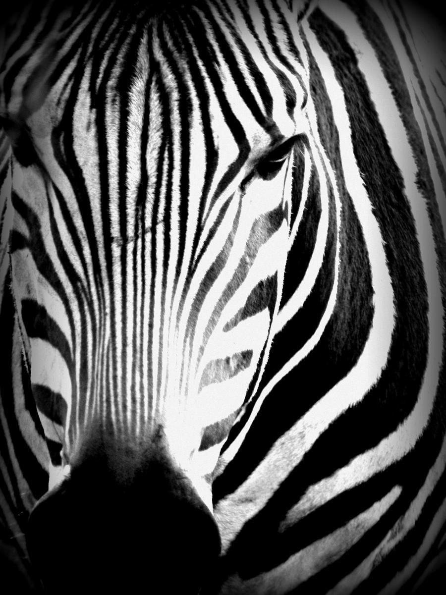 black n white zebra by bluezebra3 on deviantart. Black Bedroom Furniture Sets. Home Design Ideas