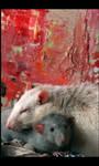 Rat love I
