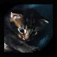 Little Kitten by h-e-photography