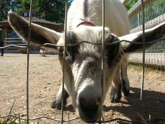 Billy Goat's Gruff by Forsaken-Evil-Child