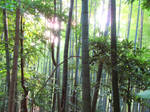 Old Bamboo Forest