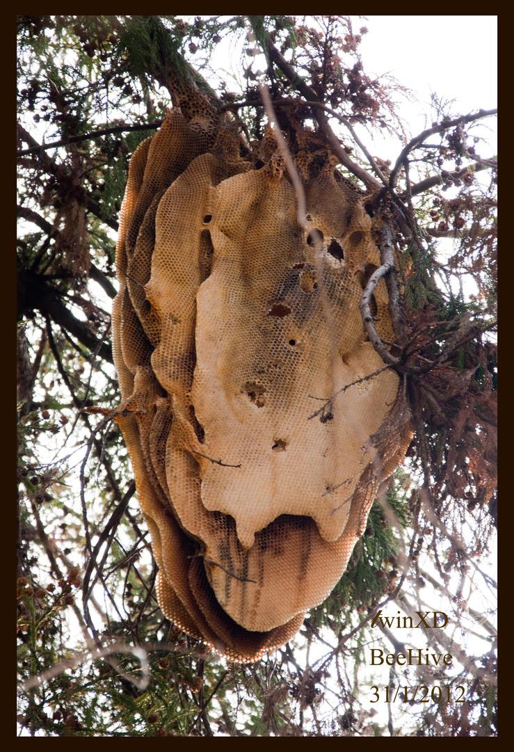 Wild honey bee hive by twinxd on deviantart