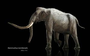 Mammuthus meridionalis by AntoninJury