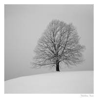 solitree