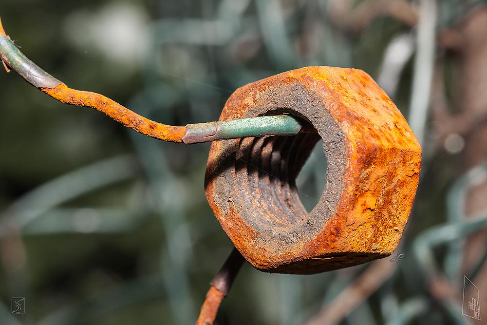 auld nut by Zyklotrop