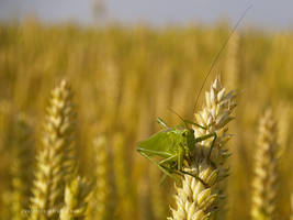 grasshopper 01 by Zyklotrop