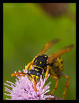 Guest3: A Wasp