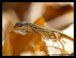 Sunbathing by Zyklotrop