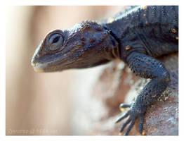 Unknown lizard by Zyklotrop