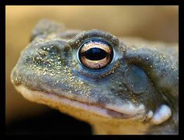 look into my eye... by Zyklotrop