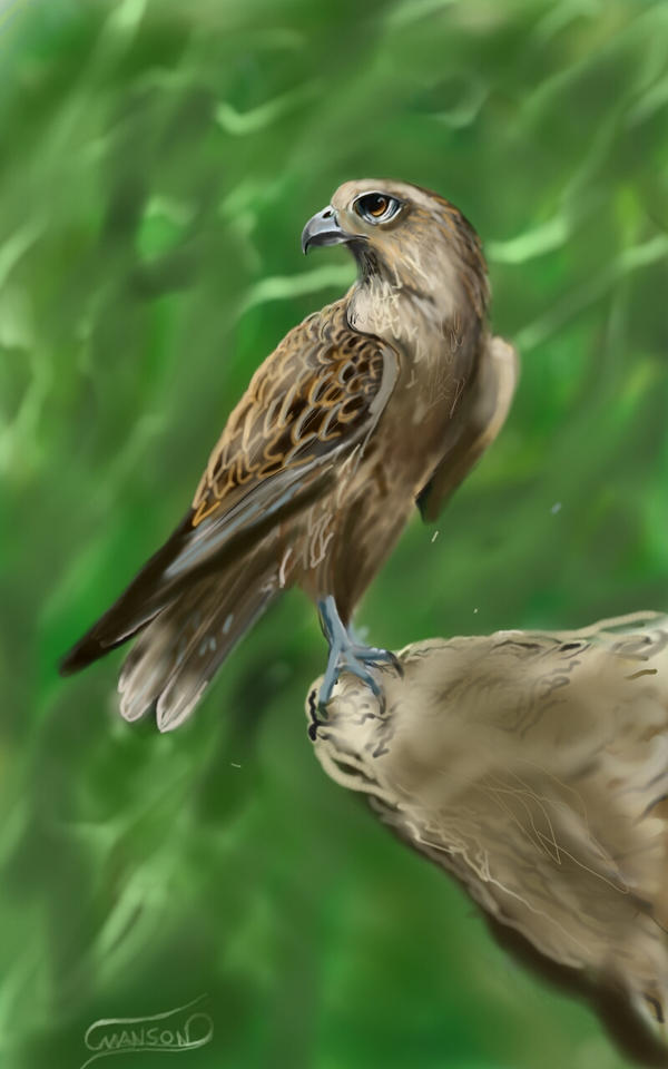 Sketch A Bird by 9LIVESLIV410