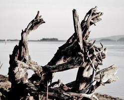 Wholly Stump