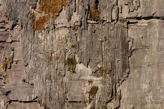 Wood Texture04