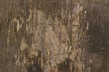 Wood Texture22